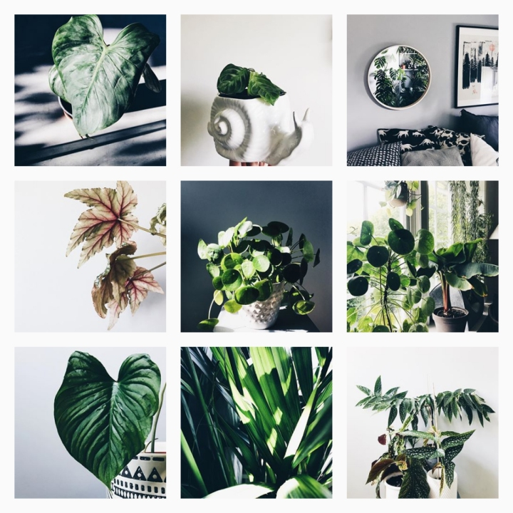 20 Instagram accounts you should follow today to inspire you tomorrow:_j_u_n_g_l_e_