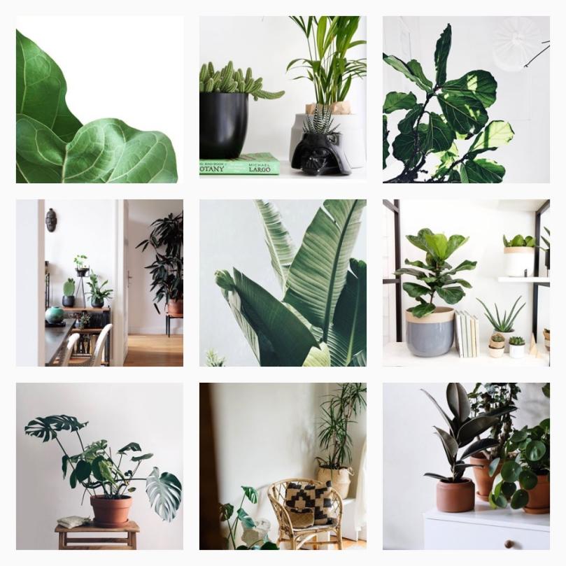 20 Instagram accounts you should follow today to inspire you tomorrow: weloveplantstlv