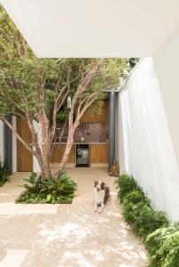 Estúdio BRA - Prajá House   narrow plot [ remodel   home remodel   contemporary   garden   modern   clean   green
