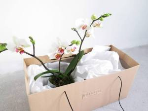 plants | greenery | indoor plants | plant care | say it with plants