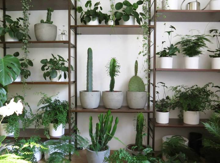 plants | greenery | indoor plants | plant care | pilea | cacti | monstera | adiantum