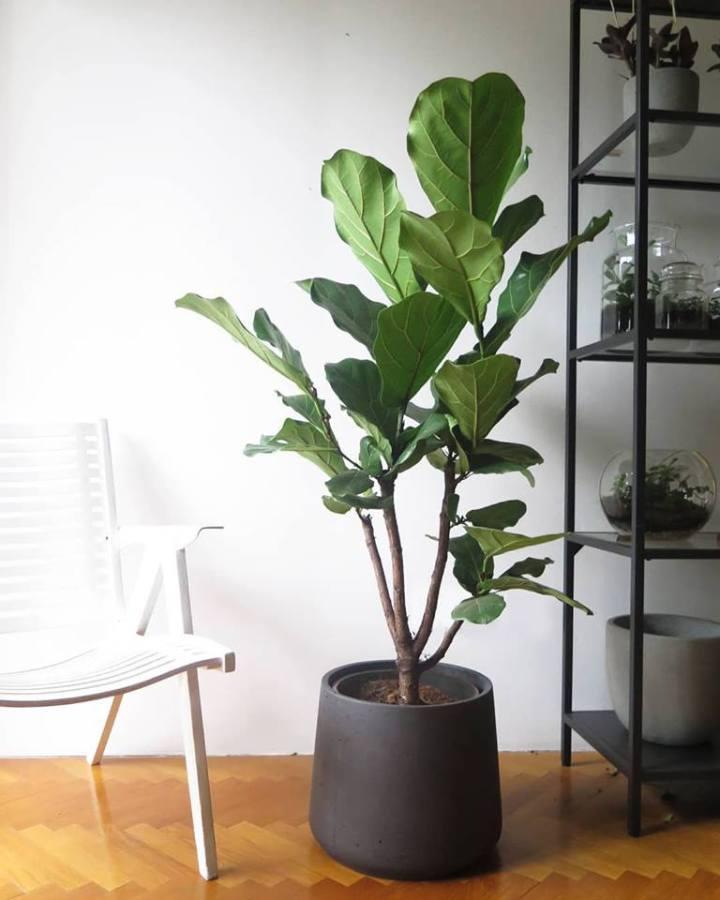 botanike_plants-4