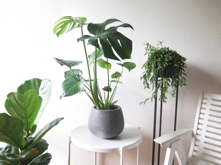 plants | greenery | indoor plants | plant care | monstera