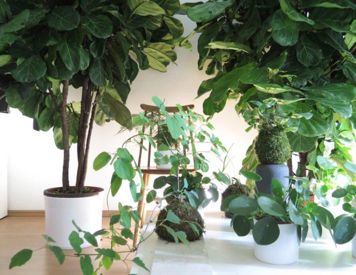 botanike_studio