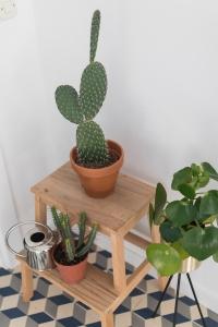 apartment tour | kitchen tour | new kitchen | kitchen design | functional kitchen | interior design | cacti plants