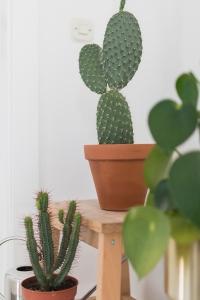 apartment tour | kitchen tour | new kitchen | kitchen design | functional kitchen | interior design | cactus